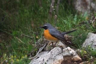 Full Day Bird Watching Tour at the Taurus Mountains near Akseki