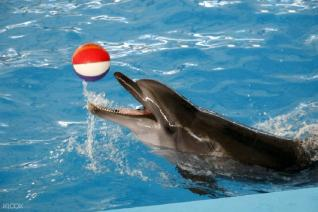 Dolphins show and Swimming with Dolphin in Kemer
