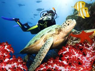 Kemer Scuba Diving: Scuba Diving for Beginners at Turquoise Waters